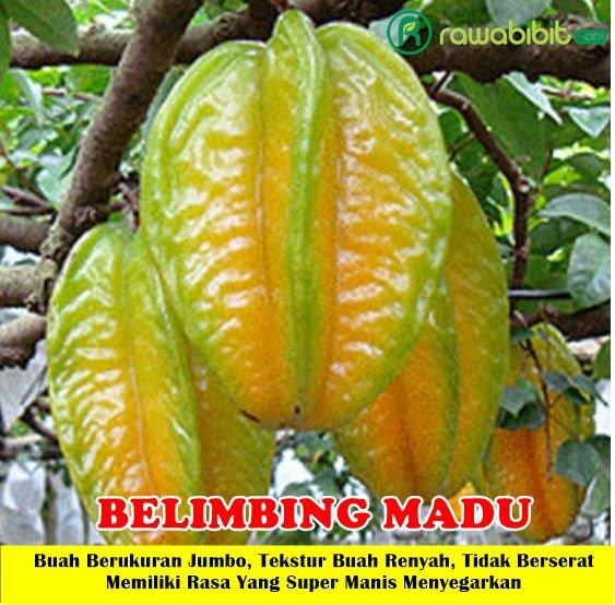 Belimbing Madu
