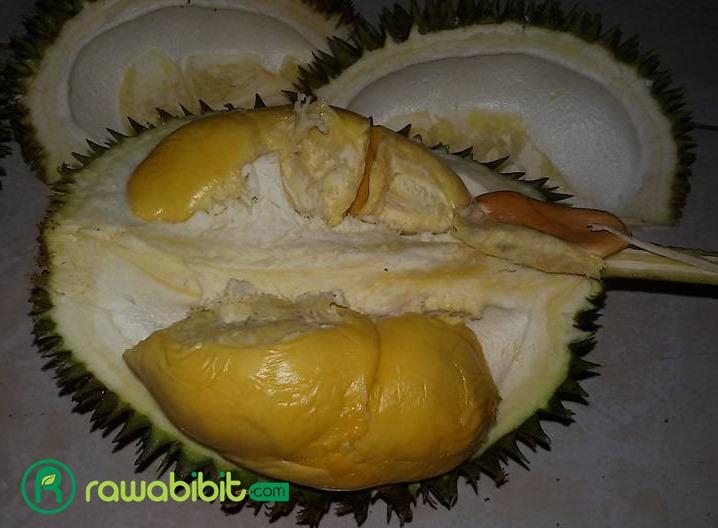 Buah Durian D24