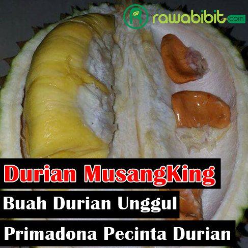 Sejarah Durian Musangking