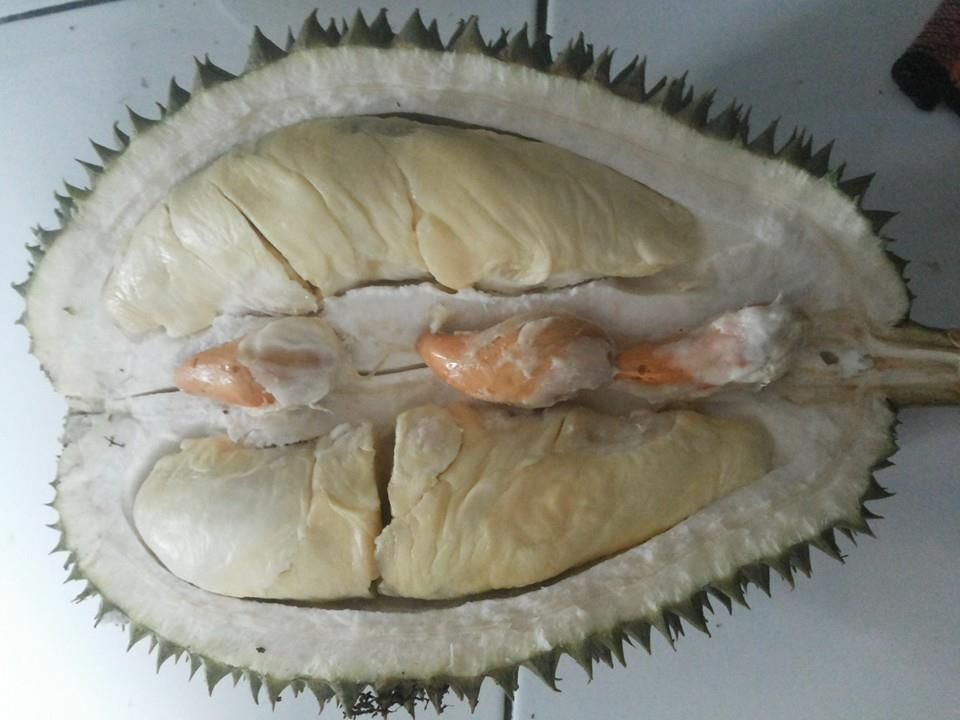 Durian Petruk super